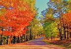 Fall Foliage French Camp Mississippi