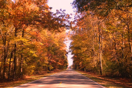 Milepost 235 - Natchez Trace Fall Foliage