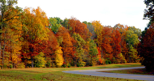 Milepost 432 - Natchez Trace Fall Foliage