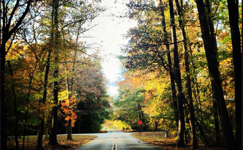 Milepost 338 / Lauderdale County Road 8 - Natchez Trace Fall Foliage
