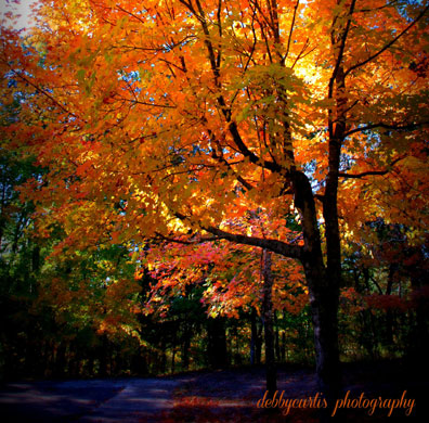 Jeff Busby Park - Little Mountain - Natchez Trace Fall Foliage