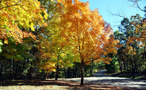 Jeff Busby Park - Natchez Trace Fall Foliage