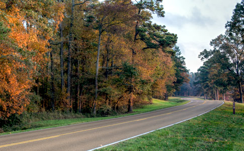 Milepost 113 - Natchez Trace Fall Foliage