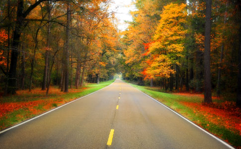 Milepost 116 - Natchez Trace Fall Foliage