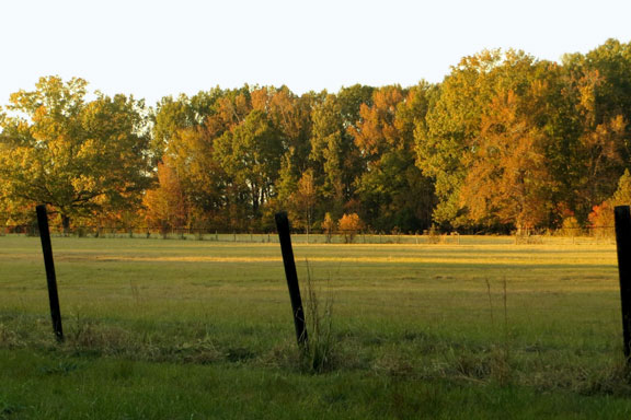 Old Trace and Brashears Stand Site - Mississippi Fall Foliage
