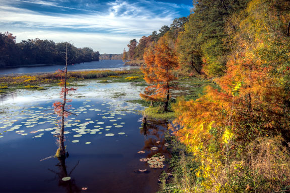 River Bend facing south down the Pearl River - Mississippi Fall Foliage
