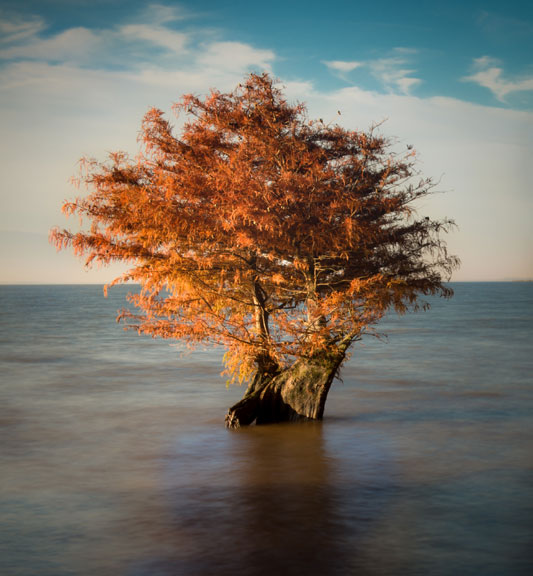 Lone Cypress Tree at Ross Barnett Reservoir - Mississippi Fall Foliage