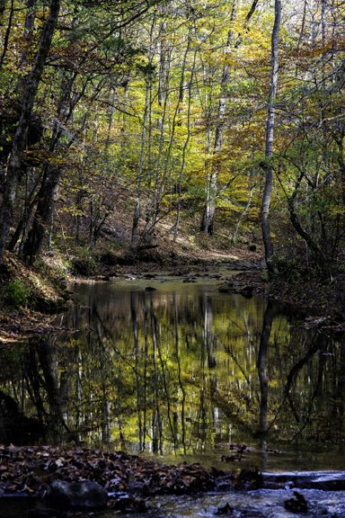 Jacks Branch - Tennessee Fall Foliage
