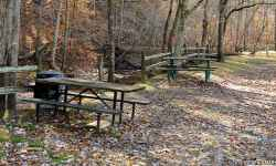Picnic Area at Burns Branch