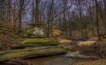 Glenrock Branch in the Winter - Natchez Trace Parkway