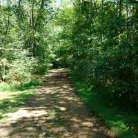 Enjoy one of the scenic trails on the property next to Swan Creek.