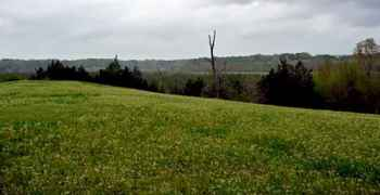 View of Natchez Trace Parkway from on top of Mangum Mound.