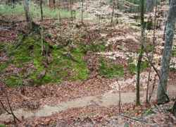 Looking down into the 15-20 foot deep Sunken Trace.