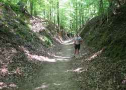 Cyclist taking a break to check out the Sunken Trace.