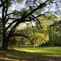 Canemount's park-like grounds with old majestic trees covered in Spanish Moss.