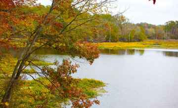 Fall foliage at the River Bend site.