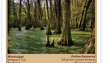 Cypress Swamp Stickers