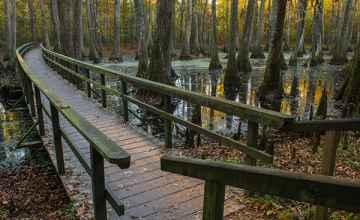 Another view of the wooden footbridge at Cypress Swamp.