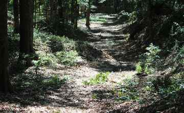 The Old Trace at the Brashear's Stand site.