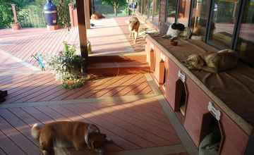 The upstairs deck is the lazy dog's domain.