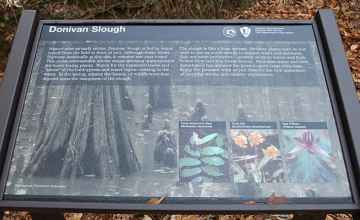 This sign is one of many at Donivan Slough that explain that types of trees that flourish in this lush lowland.