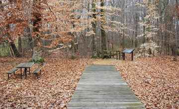 This boardwalk is the beginning of a circular trail that you can walk in 20 minutes or less.