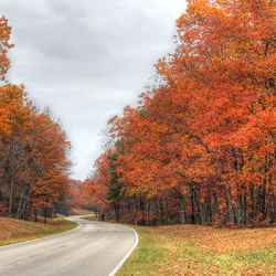 Fall foliage near milepost 375.