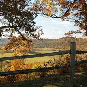 Columbia - Centerville area: Fall foliage at Baker Bluff Overlook.