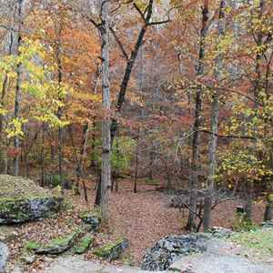 Hohenwald - Summertown area: Fall foliage at Jacks Branch.