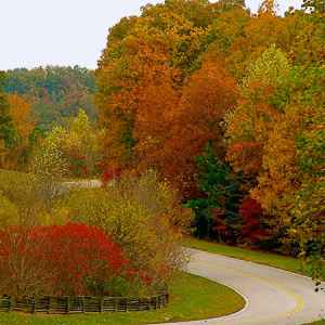 Leiper's Fork - Fly area: Fall foliage near milepost 423.