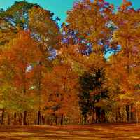 Fall Foliage at Jeff Busby