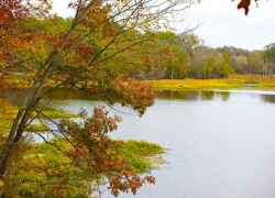 Fall foliage at River Bend.