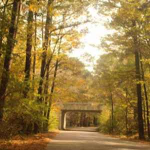 Canton - Ridgeland - Jackson area: Fall foliage on the Natchez Trace Parkway near the West Florida Boundary site.