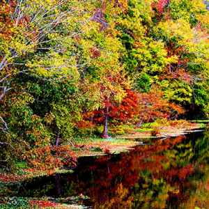 Canton - Ridgeland - Jackson area: Fall foliage at River Bend.