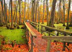 Mississippi - Cypress Swamp
