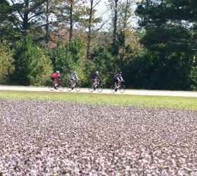 Cycling past cotton fields on the Natchez Trace Parkway.