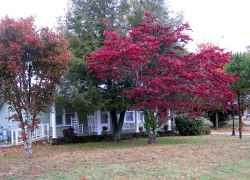 Miss Monetta's Country Cottage - Collinwood, TN