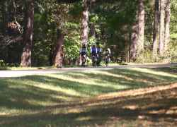 Biking in the shade of huge pine trees near Kosciusko, MS.